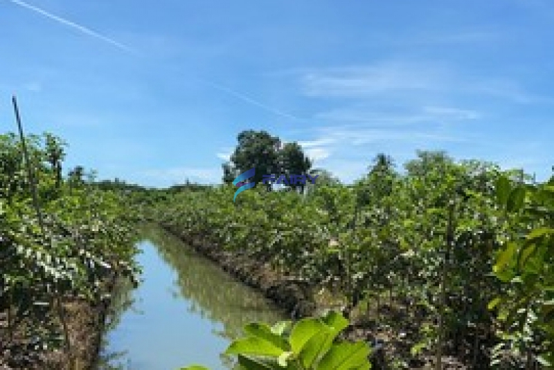 ขายที่ดิน 19-3-24.9 ไร่ สวนผลไม้ อ.สามพราน จ.นครปฐม ที่ดินแปลงสวย ล้อมรั้ว ปลูกฝรั่ง มะม่วง มะพร้าว มีบ่อปลา บ้านพัก เหมาะแก่การลงทุน ฯลฯ